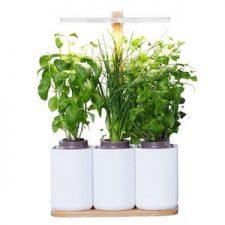 Un potager d'intérieur pour faire pousser ses aromatiques toute l'année