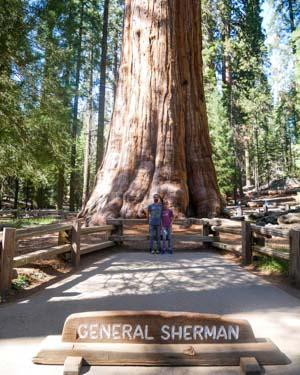 Sequoia Park - General Sherman tree