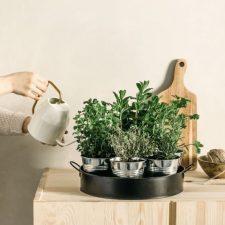 Plateau 7 aromates – 32€