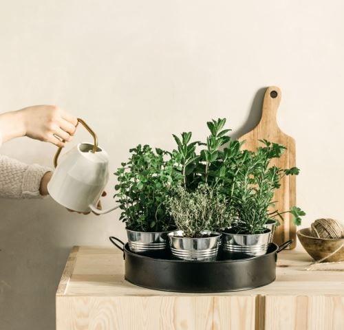 Plateau 7 aromates à faire pousser